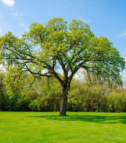 Buy used furniture and save a tree's life!